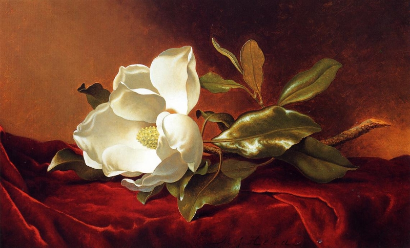 A Magnolia on Red Velvet by Martin Johnson Heade