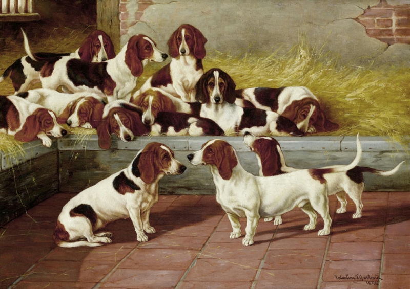 A pack of Basset Hounds by Valentine Thomas Garland