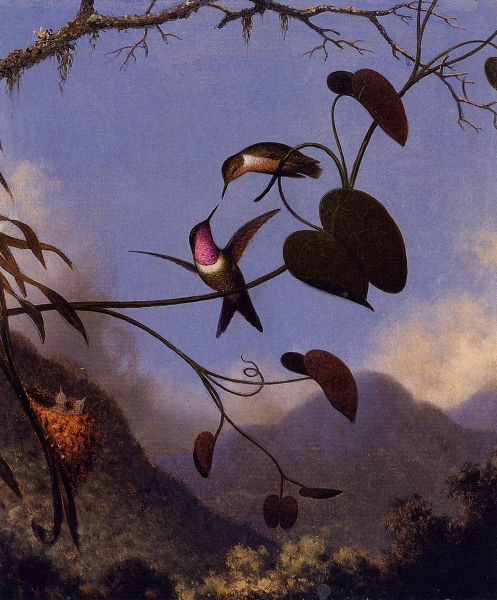 Amethyst Woodstar by Martin Johnson Heade