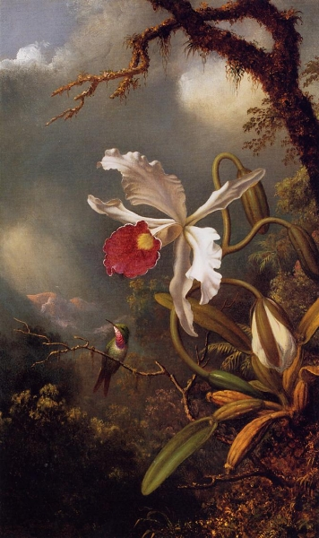 An Amethyst Hummingbird with a White Orchid by Martin Johnson Heade