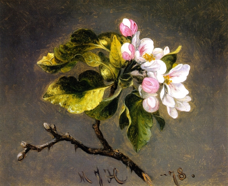 Apple Blossoms 1 by Martin Johnson Heade