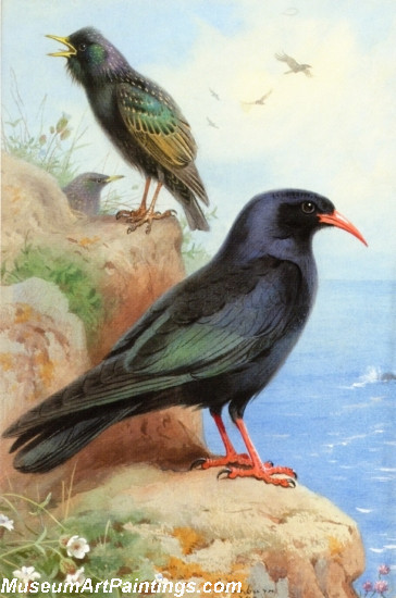 Bird Painting A Rock Starling and a Common Cough
