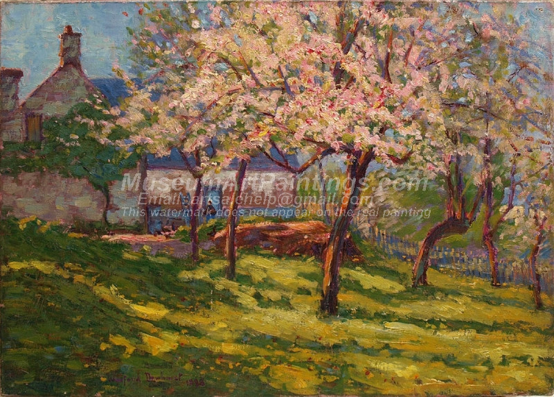 Blossoming apple trees in the garden of a Norman farmhouse