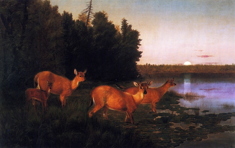 Deer at Dawn by William Jacob Hayes