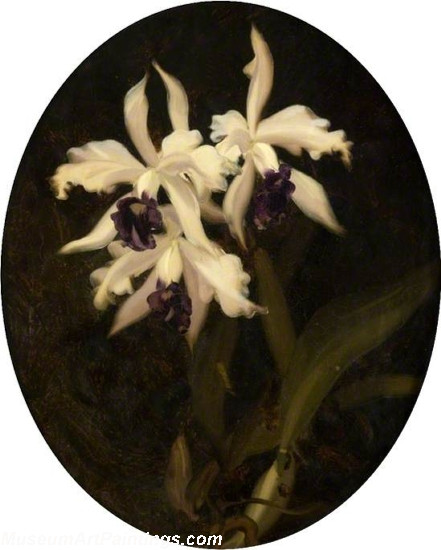 Flower Oil Painting Orchids