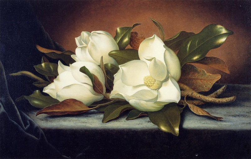 Giant Magnolias by Martin Johnson Heade