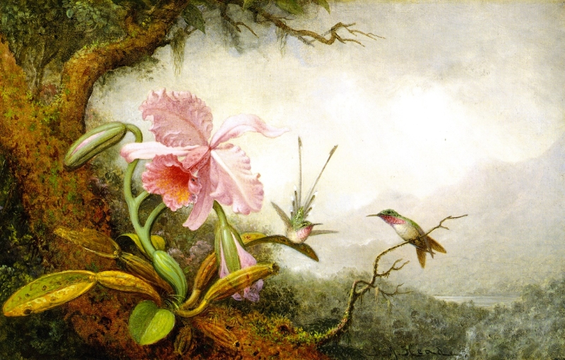 Hummingbirds and Orchids 1 by Martin Johnson Heade