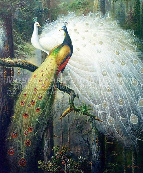 Peacock Oil Paintings 002