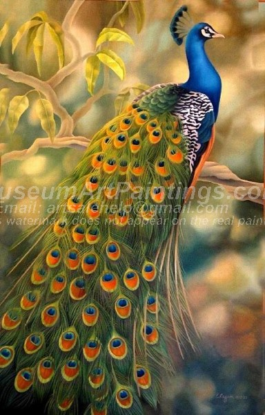 Peacock Oil Paintings 020