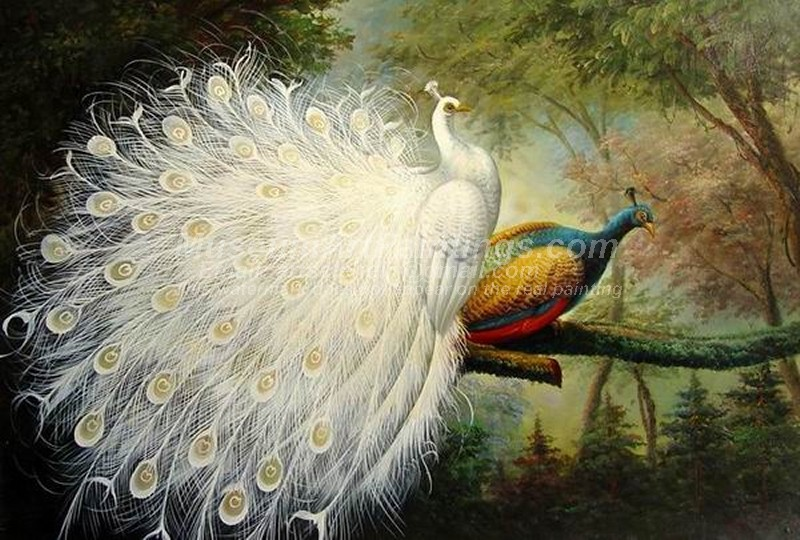 Peacock Oil Paintings 022