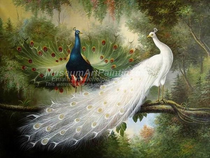 Peacock Oil Paintings 023