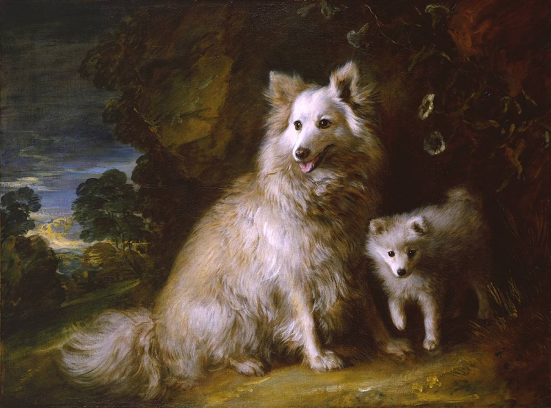Pomeranian Bitch and Pup by Thomas Gainsborough