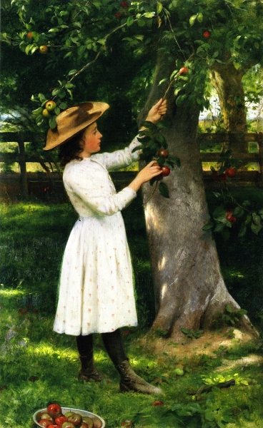 The Pick of the Orchard by Seymour Joseph Guy