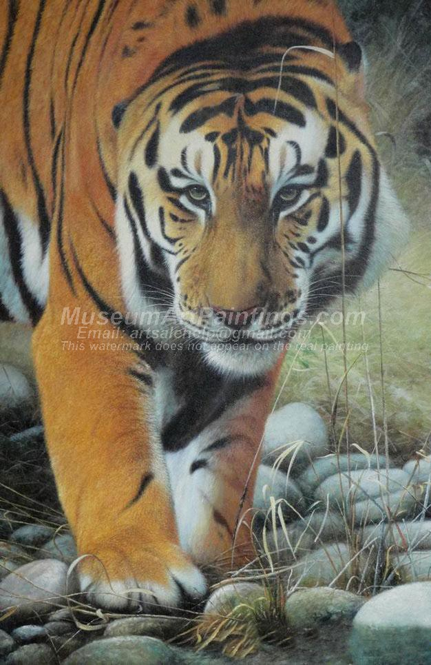 Tiger Oil Paintings 024