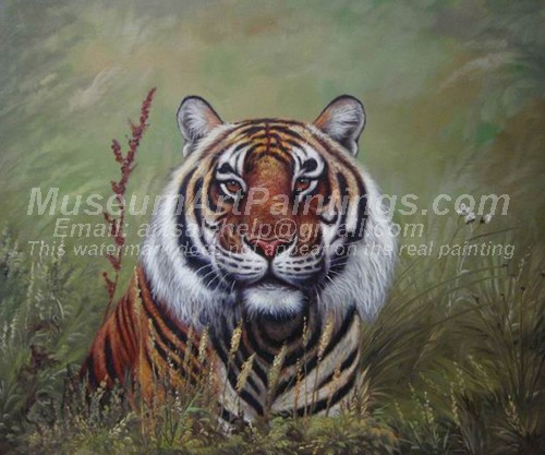 Tiger Oil Paintings 028