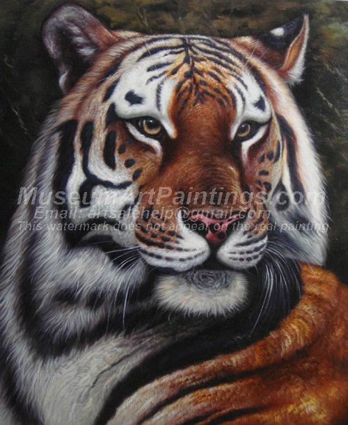 Tiger Oil Paintings 029