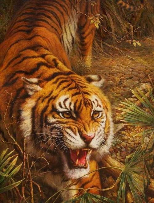 Tiger Oil Paintings 032
