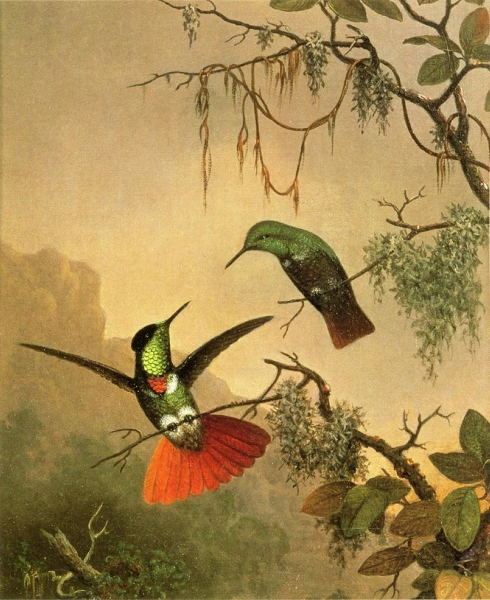 Two Hooded Visorbearer Hummingbirds by Martin Johnson Heade