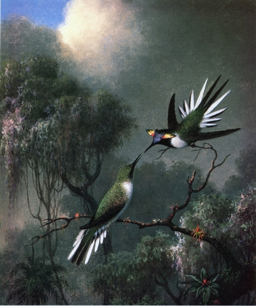 Two Hummingbirds by Martin Johnson Heade