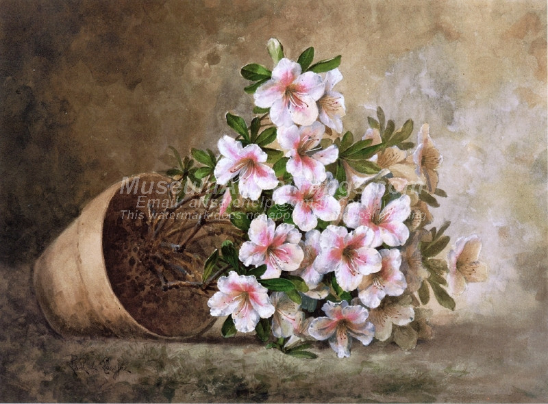 White Azaleas in a Flower Pot