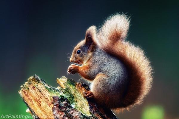 Wild Animal Squirrel Painting Canvas Prints WAP60