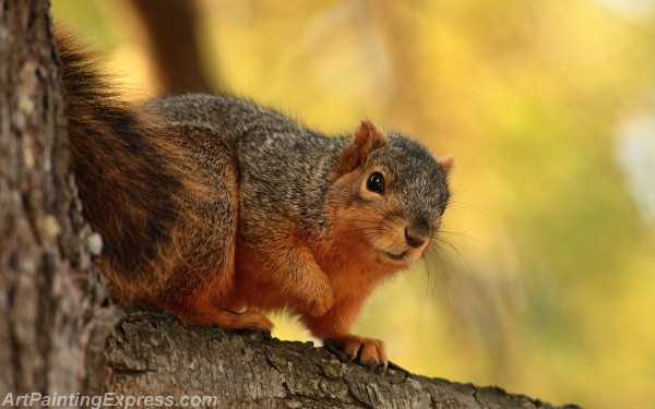 Wild Animal Squirrel Painting Canvas Prints WAP69