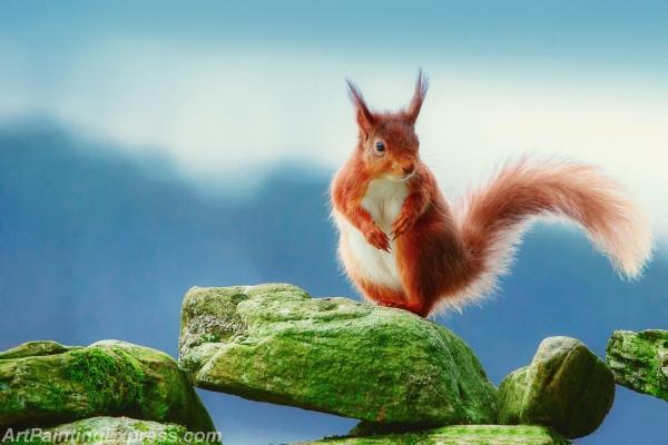 Wild Animal Squirrel Painting Canvas Prints WAP85