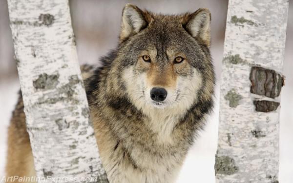Wild Animal Wolf Painting Canvas Prints WAP82
