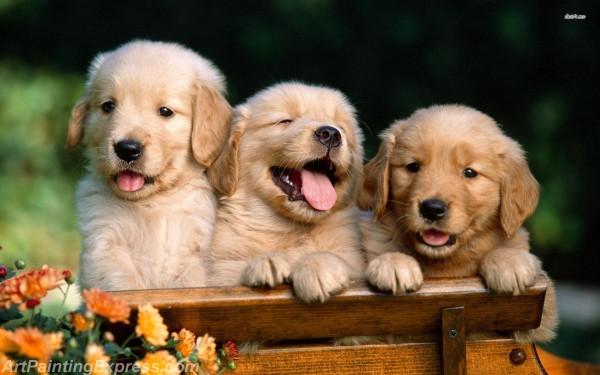 golden retriever puppies painting canvas prints