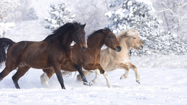 horses running in the snow painting canvas prints